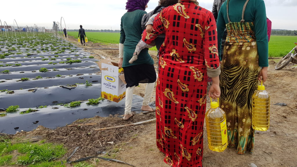 Erneute Ölverteilung: Der Weg war zu matschig, um bis zum Camp (hinten links) vorzufahren. Auf dem Feld werden Erdbeeren angebaut.