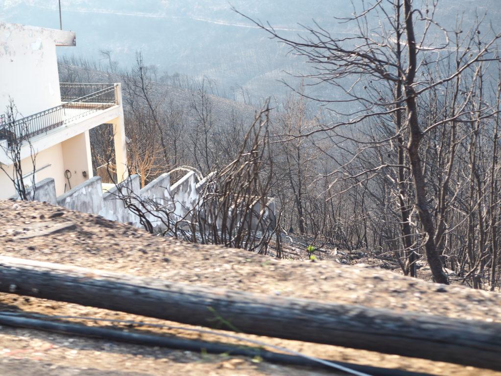 Ganze Waldflächen sind während der Brände zerstört worden.